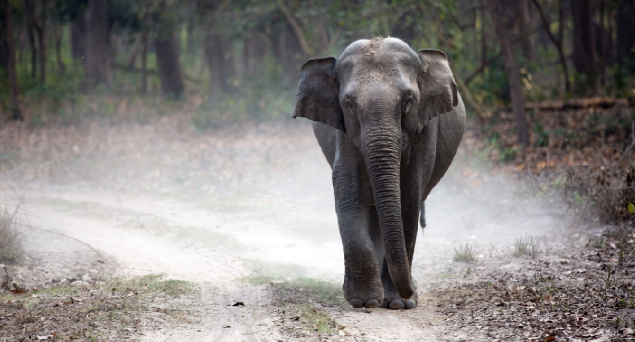 AI технология спасява животи на хора и слонове в Индия